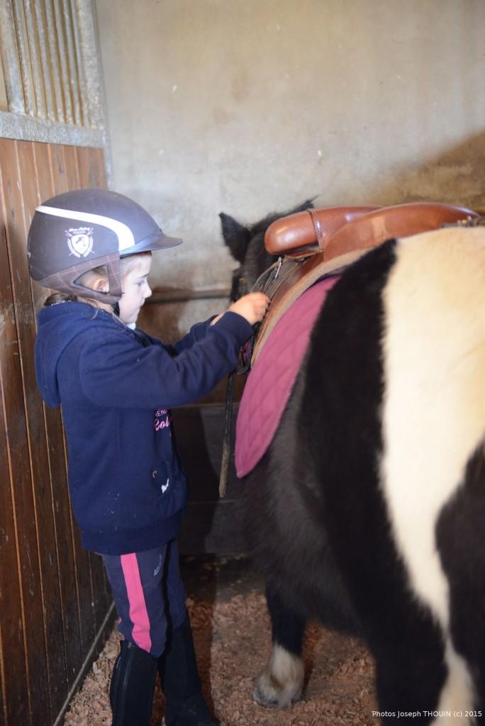 préparation du poney