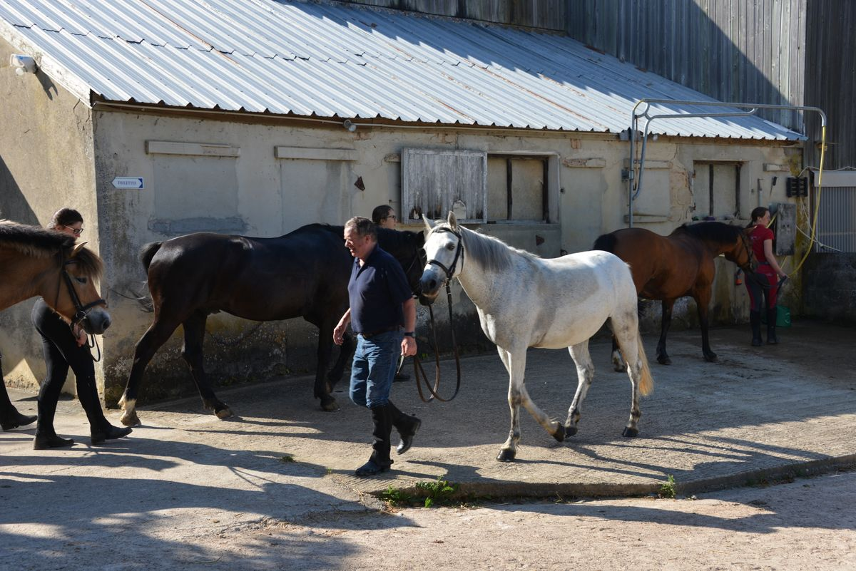 Douches chevaux